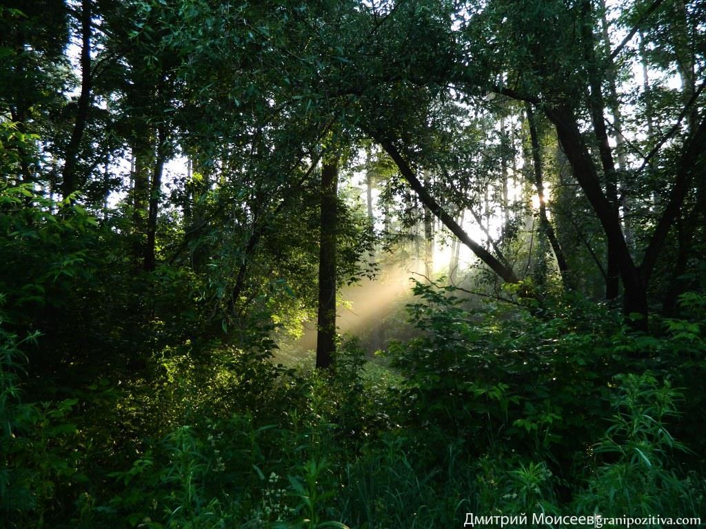 Красивое фото лучей солнца в Перми