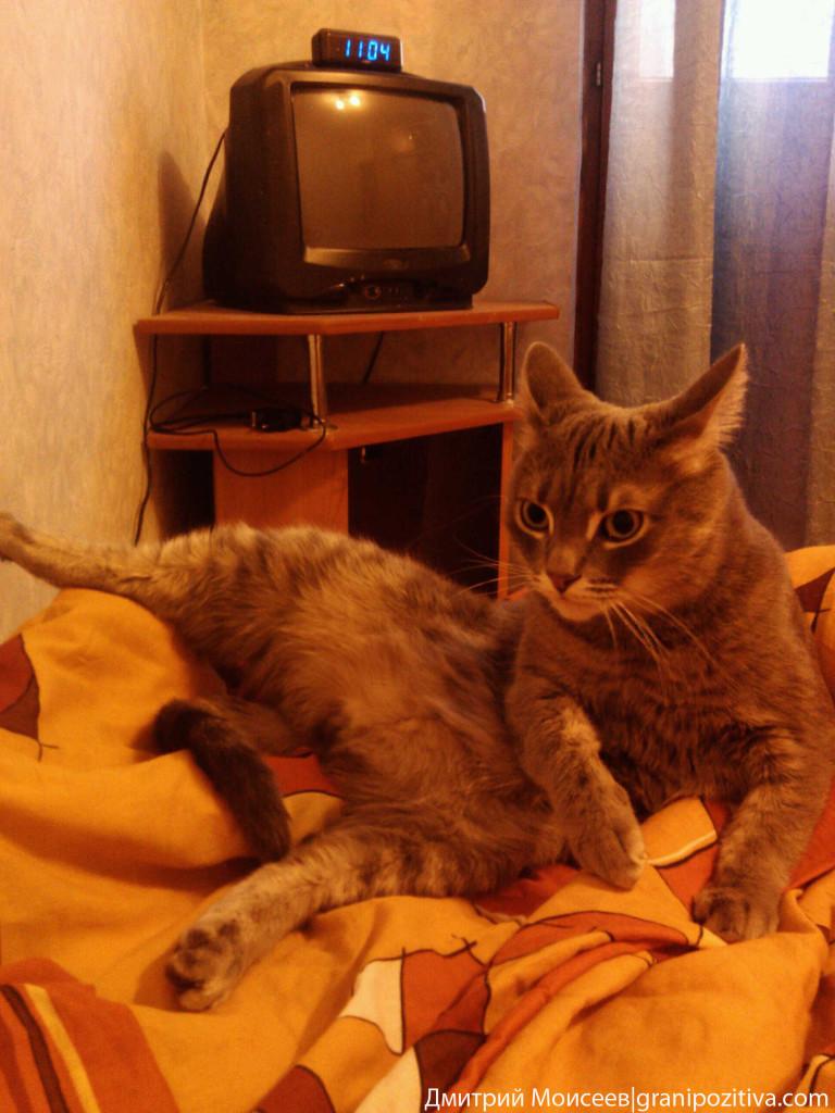 Кот лежит враскорячку на кровати и прижал уши