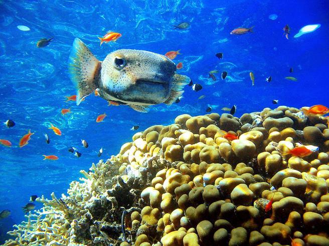 Красивая рыбка в красном море