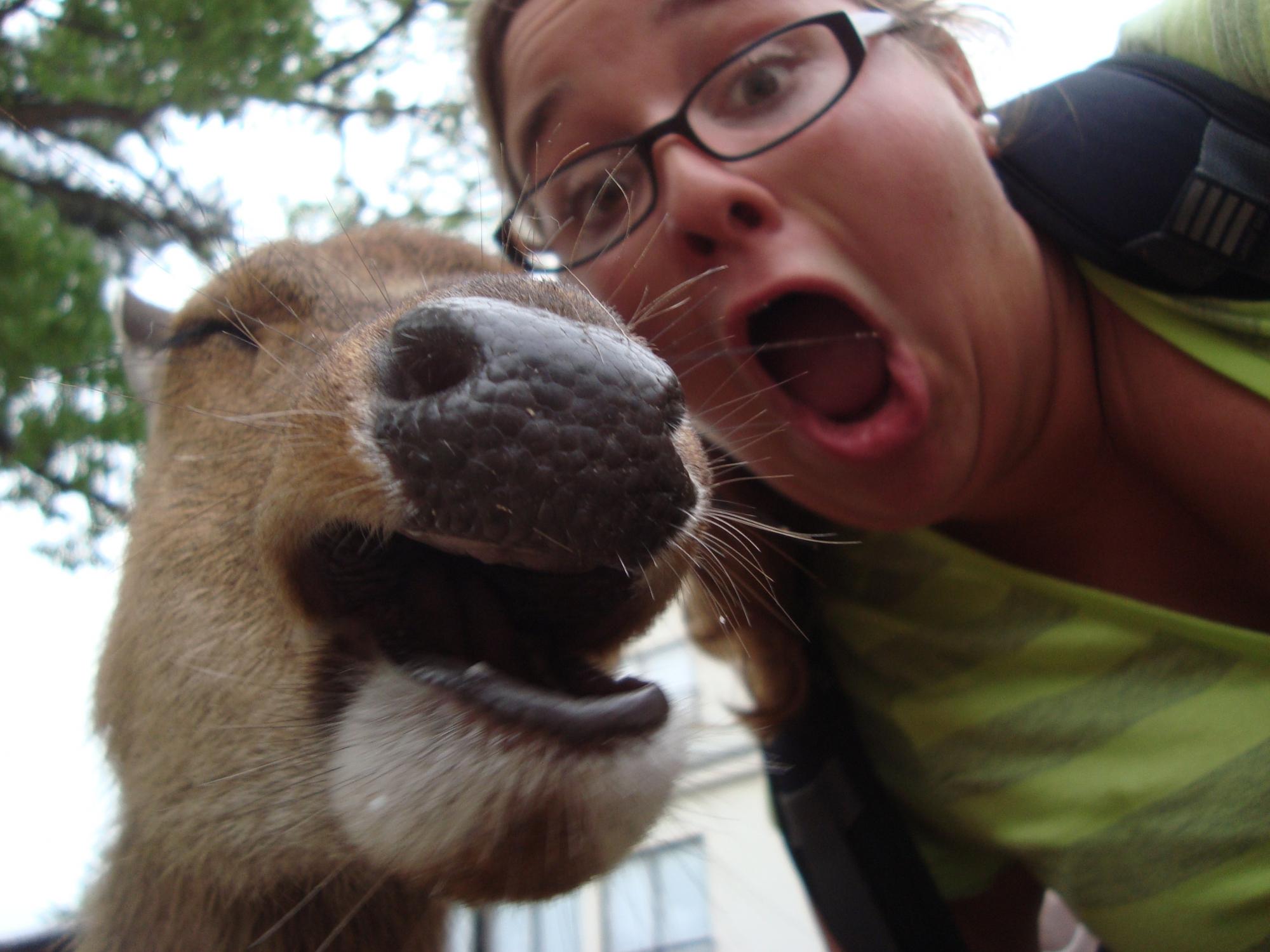Селфи с верблюдом
