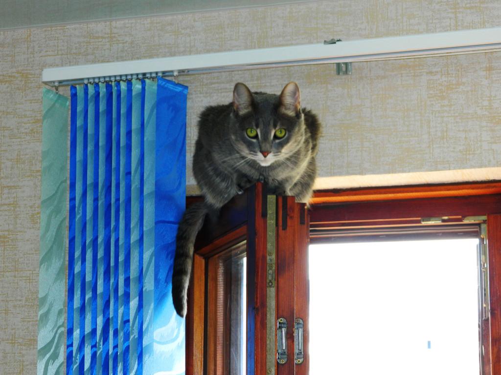 Кот сидит на окне